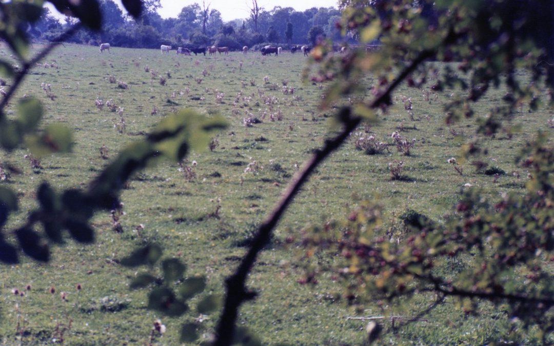 """Pierres Rinder und ein Sommer in La Rochelle – Making of """"Limeray"""" / Nr. 2"""