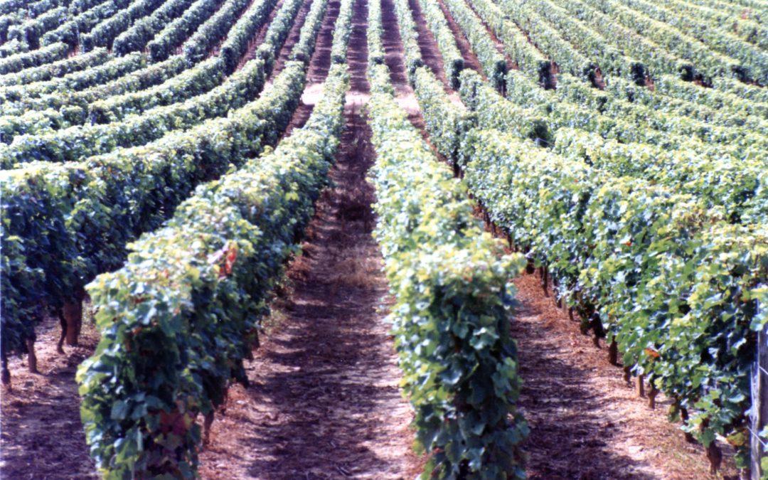 """Im Grunde dreht sich alles um den Wein – Making of """"Limeray"""" / Nr. 5"""